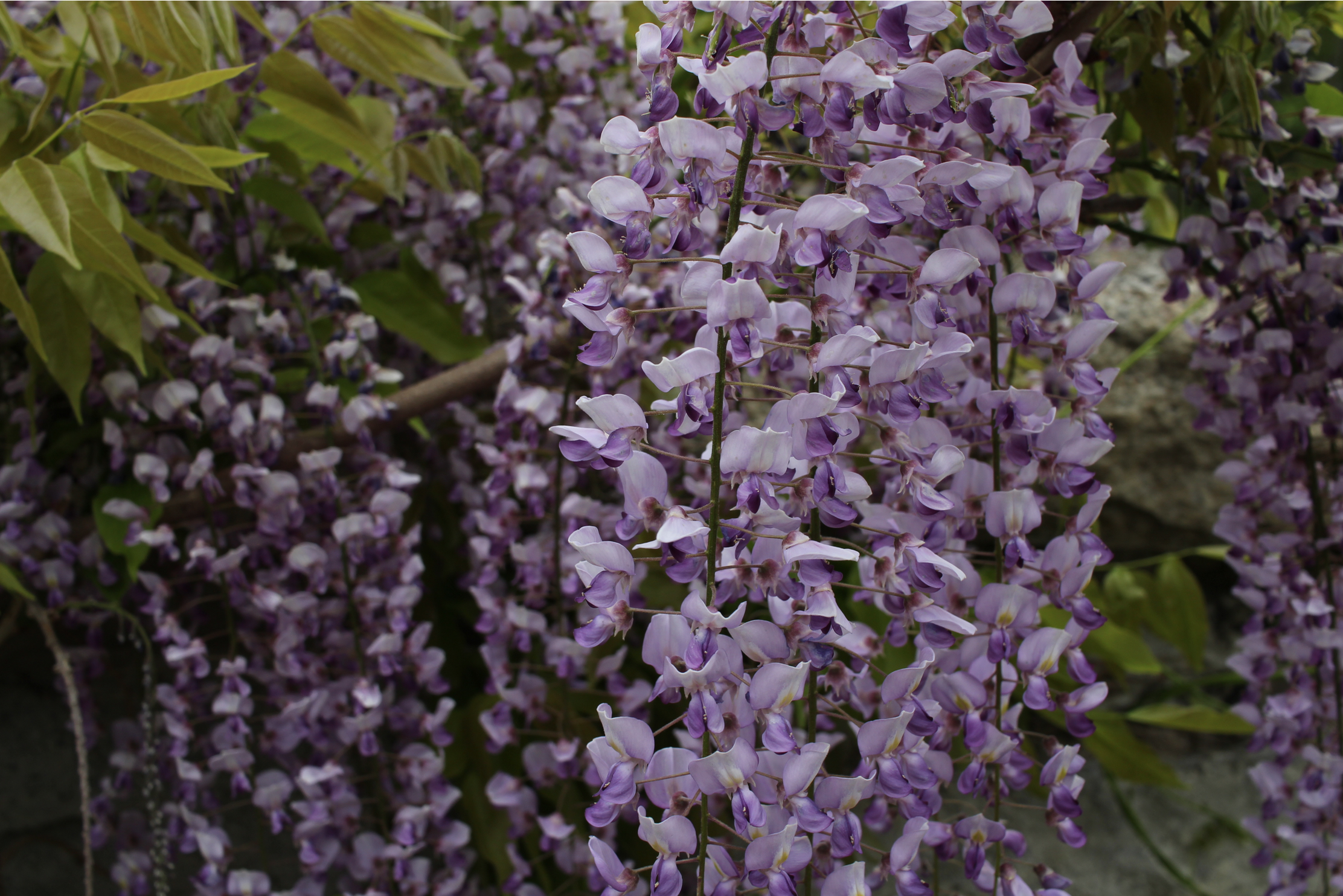 purple flowers.png